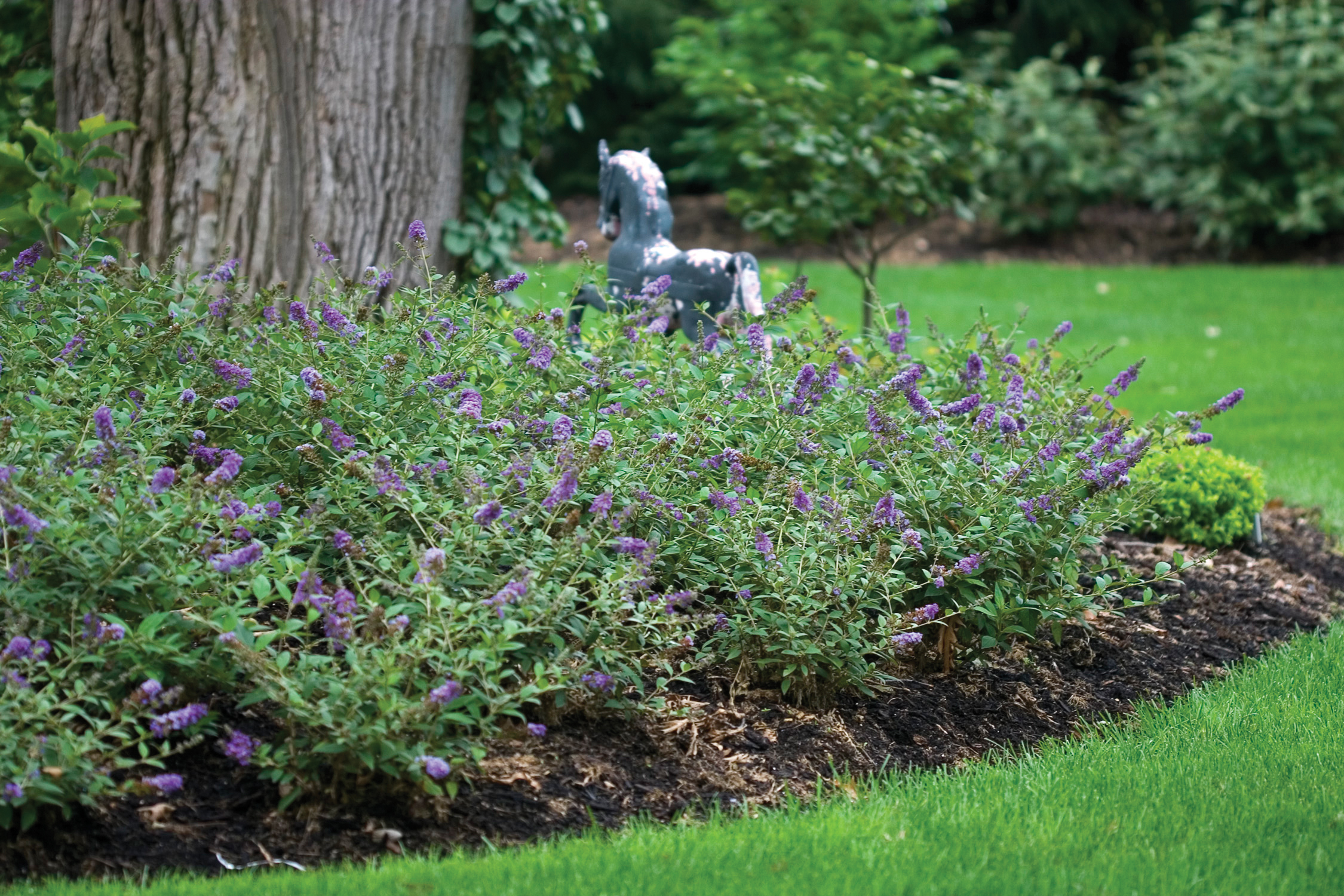 10 Great Landscape Plants Lo Behold Blue Chip Proven Winners